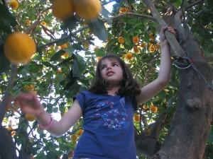 Tulia in the tree picking oranges!